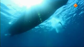Zeeschildpad en Komodovaraan