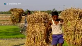 Omgaan met de natuur - Bangladesh