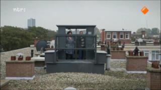 Tilduiven in Den Haag