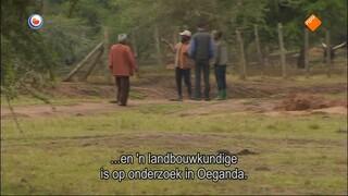 Fryslân Dok - Melkdilemma In Afrika