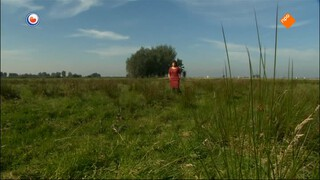 Fryslân Dok - Grûn