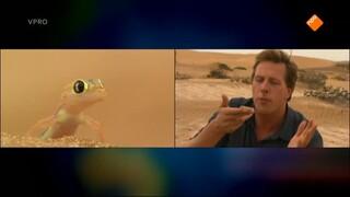 Freeks Wilde Wereld - Leven In De Woestijn