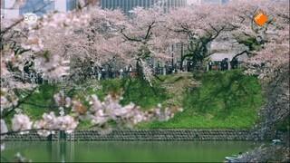Wild Japan Honshu (1/3)