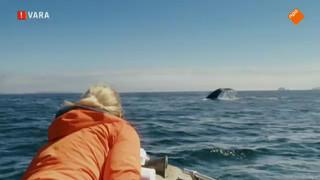 Floortje spot walvissen in Alaska