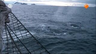 Oosterschelde's Odyssee - de wereldreis van een windjammer