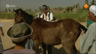 Dierenhelden in Egypte