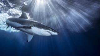 Natuur op 2: Shark Deel 2/2