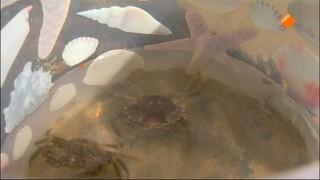Het Klokhuis - Krabben