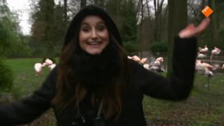 Jill in de dierentuin