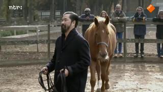 Een goed gesprek met een paard