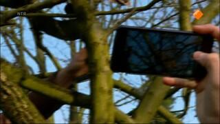 De Buitendienst Van Nieuws Uit De Natuur - Hoe Maak Je Natuurfilms?