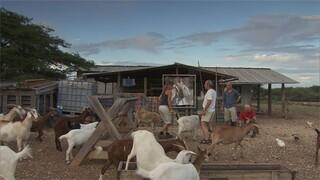 5. Helpen op de boerderij