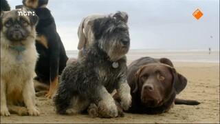 Natuur Op 2 - Natuur Op 2: Het Geheime Leven Van De Hond
