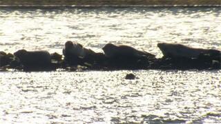 Binnenstebuiten - Zeehonden