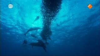 Diepzeegebergten