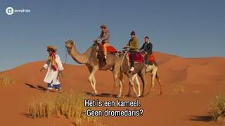 Kameel of dromedaris?