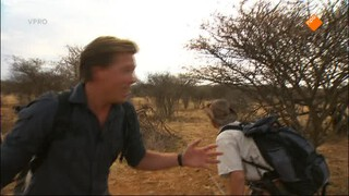 Freeks Wilde Wereld - Cheetah