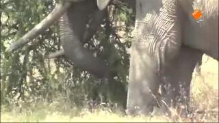 De Buitendienst Van Nieuws Uit De Natuur - Op Safari