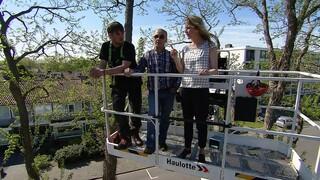 Hoge bomen vangen veel zon & Verspilde energie