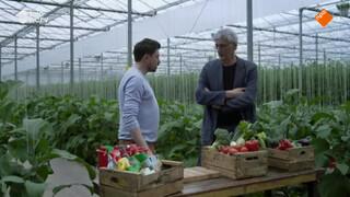 Wat is het verschil tussen biologisch en gangbare groenten?
