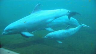 Het Klokhuis: Zeezoogdierbaby