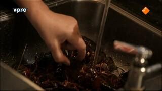 Koken Met Van Boven - Amerikaanse Rode Rivierkreeft Uit Amsterdam
