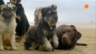 Natuur Op 2 - Het Geheime Leven Van De Hond