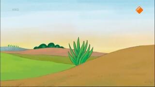 Kikker en de horizon