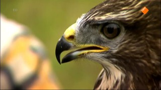 Koek & Ei - De Mes-en-vorkvogel