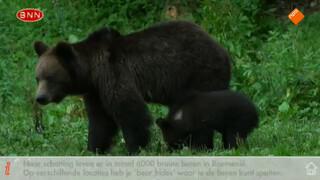 Beren spotten in de Karpaten