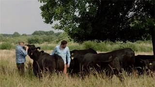Keuringsdienst Van Waarde - Angus