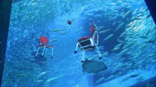 Dansende stoelen bij het aquarium