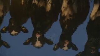 Andere Tijden De laatste Friese koe