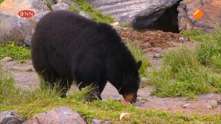 Wat je van slimme beren leren kan