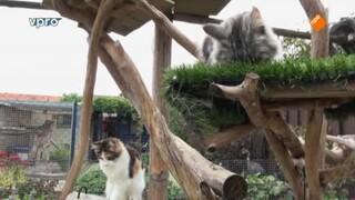 Beestieboys - Racepaard & Kattenshow
