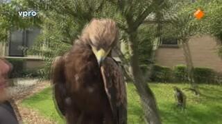 Beestieboys - Wings Of Change & Twatwa Vogels