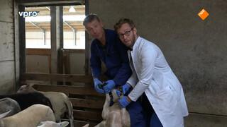 Dr. Tim knipt schapennagels