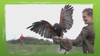 De Buitendienst Van Nieuws Uit De Natuur - Kunnen We Vliegen Als Een Vogel?