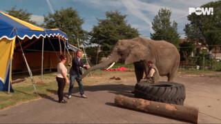 PowNews Crowdfunding: olifant Buba van Circus Freiwald