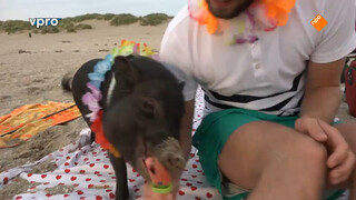 Piggy Beaching