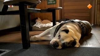 BNN kloont hond voor tv-programma