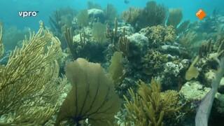 Belize - Koraal