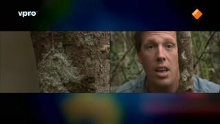 Freeks Wilde Wereld - Madagaskar - Koningen Van De Camouflage