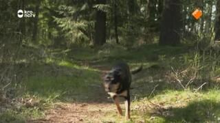 Puck en het verdwenen schaap