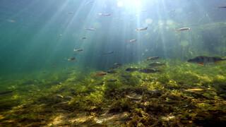 Wildernis onder water Lang leve de regen