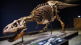 Expeditie T.rex - Expeditie T.rex