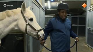 Een vleesetend paard voor Steven, graag!
