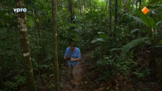 Jungle survival en kolibrie