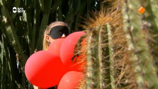De cactustest