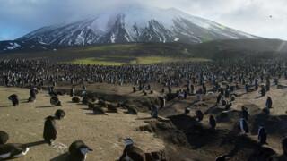 Planet Earth - Filmen Op Het Eiland Zavodovski